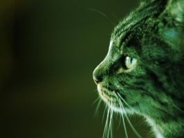Cat's green profile 1280x960 by Khrinx
