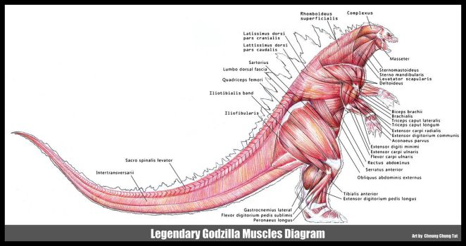 Godzilla 2014 Muscles Diagram by cheungchungtat