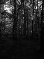 Creepy Trees (B/W) by ScotsGirl96