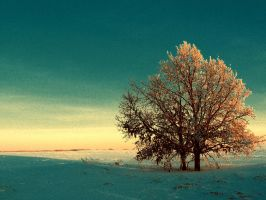 Winter tree by Anna-Belash