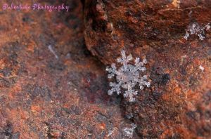 A Wow Snowflake by Kaptive8