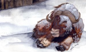 Winter: Musk Ox by shiverz