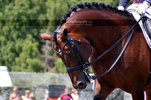 Dressage 37 by JullelinPhotography