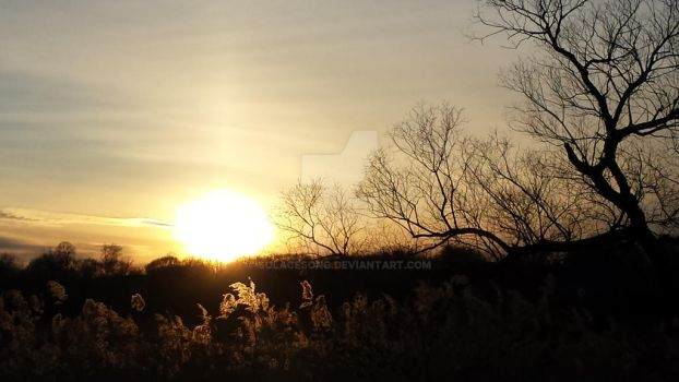 Setting Sun from the other Day by SolaceSong