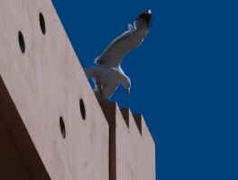 Seagull in flight moewe4 by archaeopteryx-stocks
