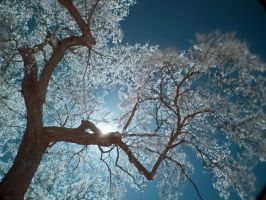 infrared dreams by foodshelf