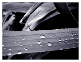 Blue Tinted Rain Drops by DayDreamsPhotography