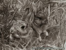 Rabbits by AmBr0