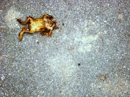 how to poeticise a dead frog by midwinters