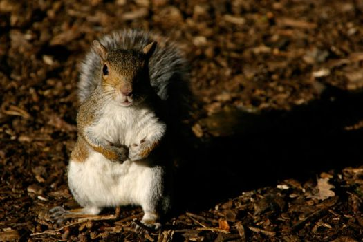 Squirrel in the sun by overtilt