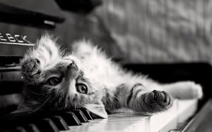 Piano Cat by kamysweet