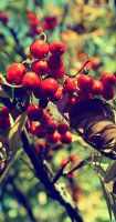rowanberry by ISAWTHESTARSTONIGHT