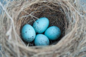 Bird Nest with Eggs 01 by FairieGoodMother