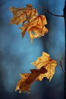 Leaves by SyllAndy