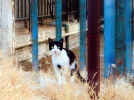 black and white cat by BL00DYSunflowers