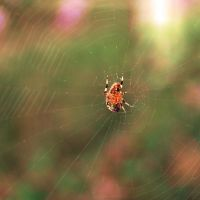 Friendly neighborhood spider by Xandriia1