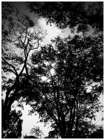 trees by geyl