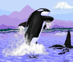 Pacific Northwest orca by liquidspoof