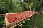 coffee drying by kg177