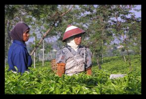 The Tea Pickers by Dane103