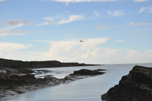 seagul above the sea by ChrisBrowning