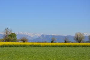 Colza fields Massif of Vercors Alps mountains by A1Z2E3R