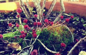 Moss Roses by CozzaCake