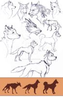 Canine practice by Hatted-Squirrel