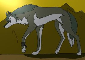 Wolf Link- The long walk by 36-May-36