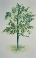 Tree - Painting study camp #DAY3rd by PBeata