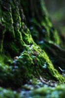 Sun-dappled Moss by 3hika