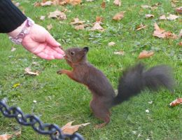squirrel2 by syccas-stock