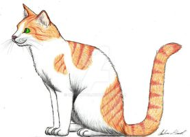 BrightHeart by Wildcat09