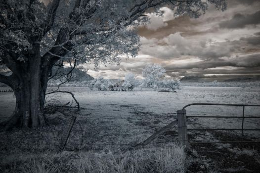 Boonah Infrared by nutmeg-42