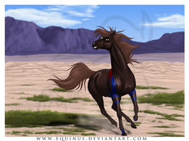 Desert Spirit by Equinus