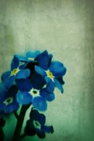 forget.me.not 3 by Lady-Twiglet