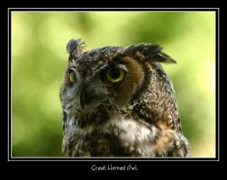 Great Horned Owl by WindCrest