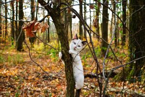 Cat on a Tree by fixer