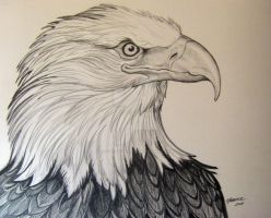 Eagle  5 Pencil Rendering by HouseofChabrier