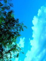 Tree and Sky by Selenexul