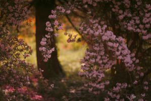 Blooming Tree by ildiko-neer