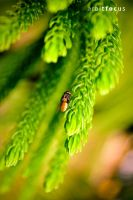 coz ladybugs are cliche by anveshdunna