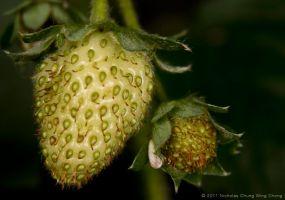 Strawberry yet to be ripened by Nicshooter