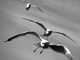 Attack of the Birds by TheFastFiduciary