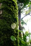 Rainforest Moss by THEsimplePLEASURES