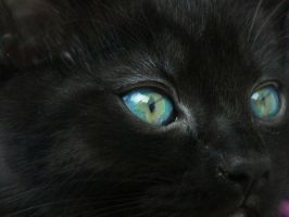 Beautifull Eye. by LordMcWhiskers
