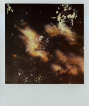 Trying out polaroids 4 by tilsley