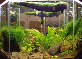 My planted tank by cat-women2