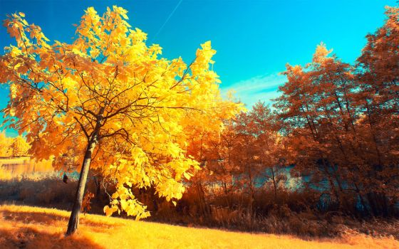 Yellow Trees Part V by myINQI