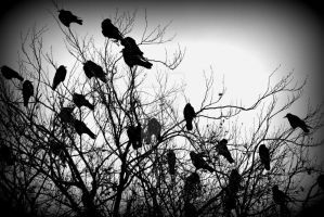 crows. by ChaosMissi